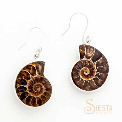 Sterling Silver Glossy Ammonite Earrings on hook
